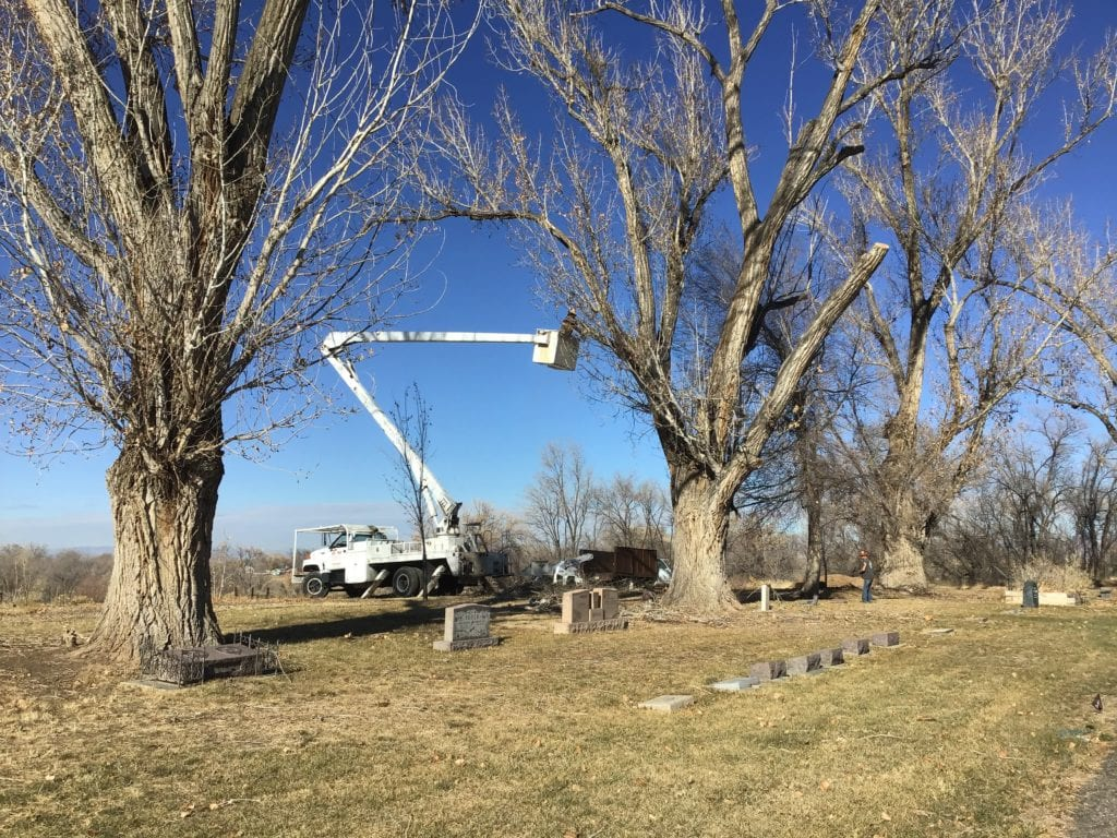 R & M Tree Service Grand Junction